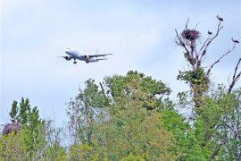 El Colegio Oficial de Pilotos alerta de los riesgos para la seguridad aérea de los impactos con aves